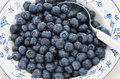 Blueberries in a pretty dish freshly washed blue and white Royalty Free Stock Photo