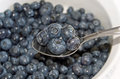 Blueberries ripe organic a healthy and nutritious snack Royalty Free Stock Photo
