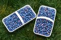 Blueberries in two plastic white baskets Royalty Free Stock Photo
