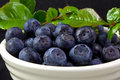 Blueberries in a White Bowl Stock Image