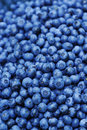 Blueberry Background Stock Image