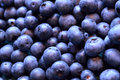 Blueberry background of freshly picked fruit Royalty Free Stock Photo