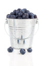 Blueberry berries in a metal bucket isolated on white background Stock Image