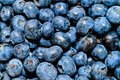 Blueberry bunch Stock Image