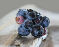 Blueberry Bunch Royalty Free Stock Photo