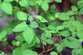Blueberry close up image with wild Stock Photo