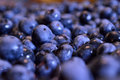 Blueberry closeup background Royalty Free Stock Photo