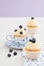 Blueberry cupcakes Royalty Free Stock Photo