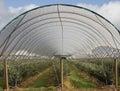 Blueberry Farm Royalty Free Stock Photo
