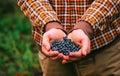 Blueberry Fresh Picked Organic...