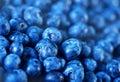 Blueberry Royalty Free Stock Photo