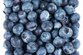 Blueberry fruit Royalty Free Stock Photos