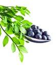 Blueberry Isolated On White Ba...