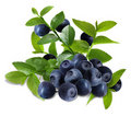 Blueberry and leaves Stock Photography