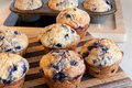 Blueberry muffins baked at home Stock Photography