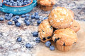 Blueberry muffins and berries delicious homemade with fresh blueberries spilling around them Royalty Free Stock Photo