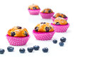 Blueberry muffins berry white background Stock Image