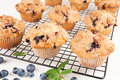 Blueberry muffins close up of with crumb top on a rack Royalty Free Stock Images