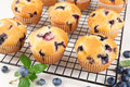 Blueberry muffins close up of on a rack Royalty Free Stock Image