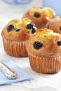 Blueberry muffins fresh baked in vertical format Royalty Free Stock Images