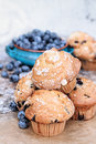 Blueberry muffins and fresh berries delicious homemade with blueberries in the background Royalty Free Stock Photography