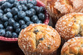 Blueberry muffins with fresh blueberries Stock Image