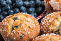 Blueberry muffins with fresh blueberries Royalty Free Stock Photos