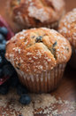 Blueberry muffins with fresh blueberries Royalty Free Stock Photo