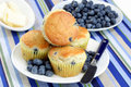 Blueberry Muffins with Fresh Blueberries Stock Photography