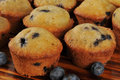 Blueberry muffins fresh cooling on a cutting board Royalty Free Stock Image