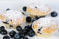 Blueberry muffins with powdered sugar on slate dark Royalty Free Stock Photography