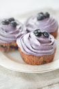 Blueberry muffins still life selective focus Stock Image