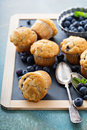 Blueberry muffins on a tray Royalty Free Stock Photo