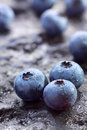Blueberry (Northern Highbush Blueberry) fruits Stock Photography