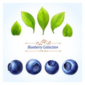 Blueberry set leaves and berries isolated on white background realistic digital paint you can make your own composition with s Stock Photos