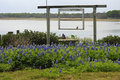 Bluebonnet Garden at Lake House Stock Photography