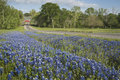 Bluebonnets and a Covered Bridge Stock Photos