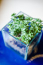 Blueish decorative Crassula plant in a glass pot Royalty Free Stock Photo