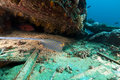 Bluespotted stingray at the Yolanda wreck in the Red Sea. Stock Photography