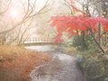 Blur Autumn Background