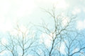 Blur background of Dry tree branch silhouette over blue sky Royalty Free Stock Photo