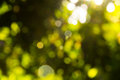 Blur christmas tree green leaves with light of the sun Royalty Free Stock Photos