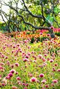 Blur focus pink fields winter fields outdoor tree     flawer garden colorful green nature summer Royalty Free Stock Photo