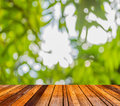 blur image of Abstract Bokeh of tree green color background Royalty Free Stock Photo