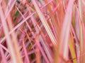 Blur of Rainbow Tree Royalty Free Stock Photo