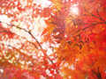 Blur and soft natural autumn leave Royalty Free Stock Photo