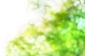 Blur Tree Background