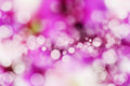 Blured background pink texture bokeh Stock Images