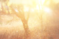 Blurred abstract photo of light burst among trees and glitter bokeh lights Royalty Free Stock Photo