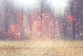 Blurred abstract photo of light burst among trees and glitter bokeh lights. filtered image and textured Royalty Free Stock Photo